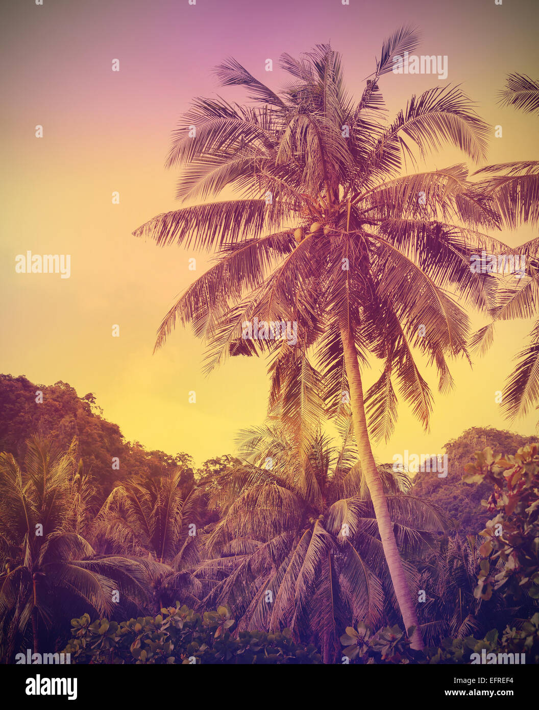Vintage faded nature background, palms at sunset. - Stock Image