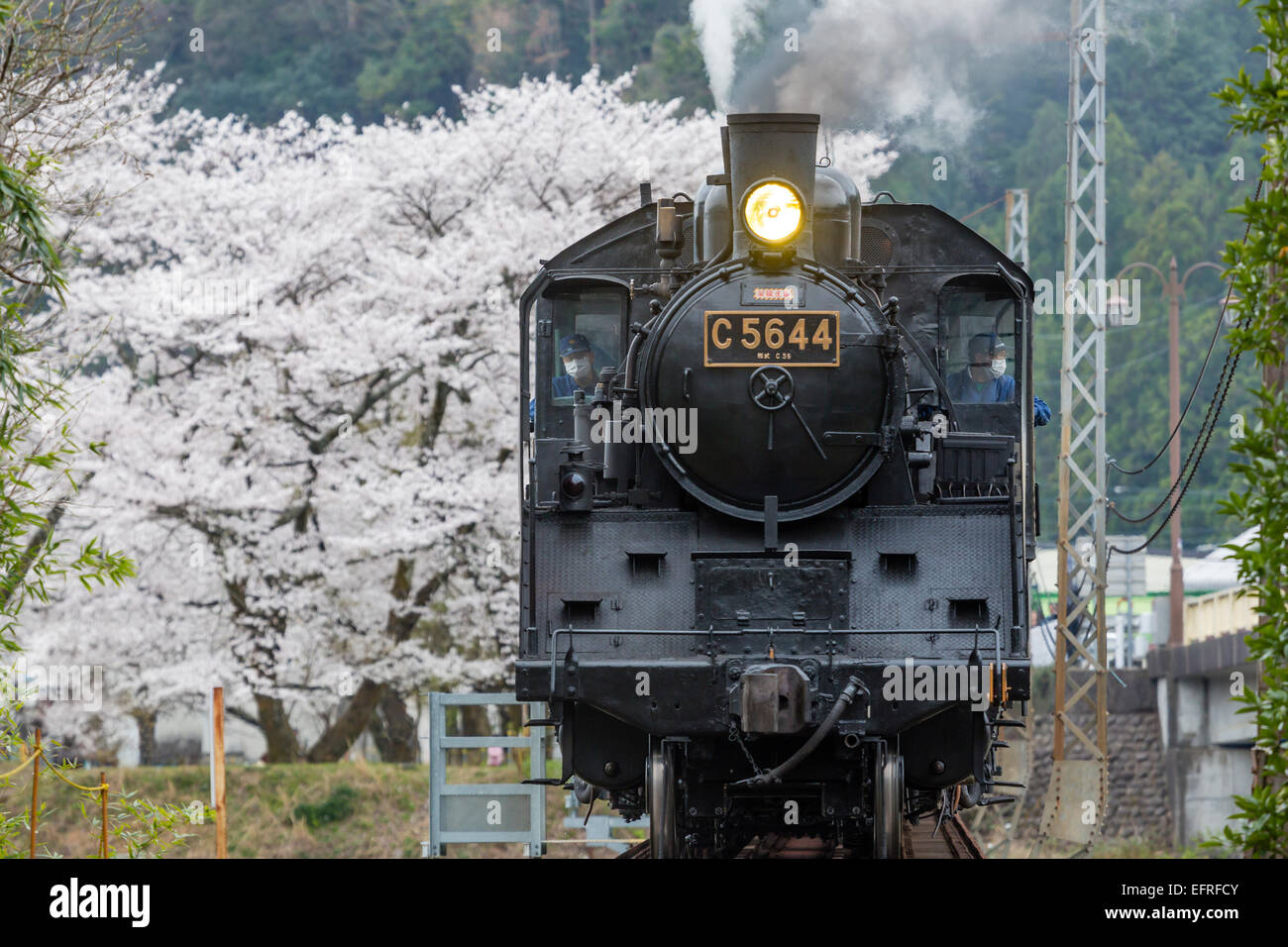 Steam Locomotive and Cherry Blossoms, Kanagawa, Japan - Stock Image