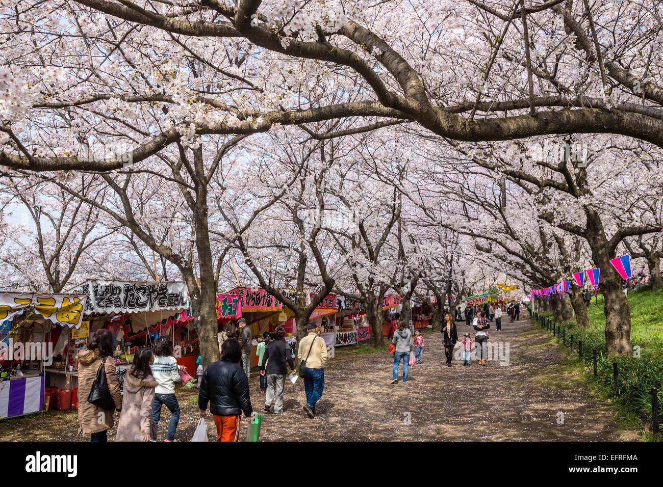 Gongendo Sakura Tsutsumi, Saitama, Japan - Stock Image