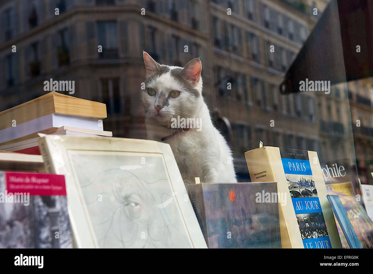 Cat against the Window in Used Bookstore, Paris, France - Stock Image