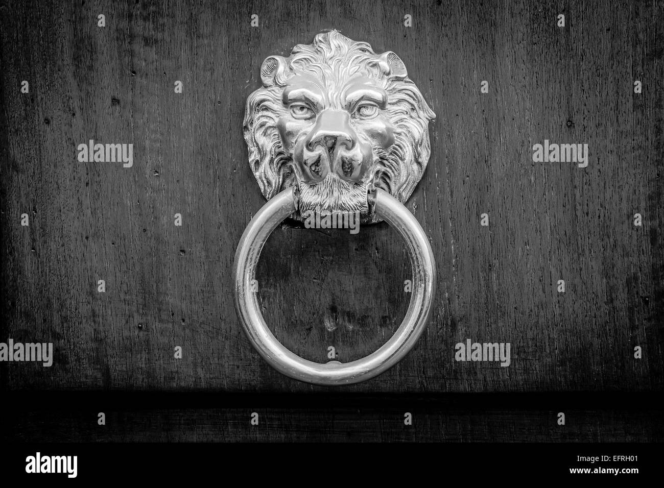 Traditional door knocker on a wood door, iron made, showing the face of a lion. Typical ornament for ancient italian - Stock Image