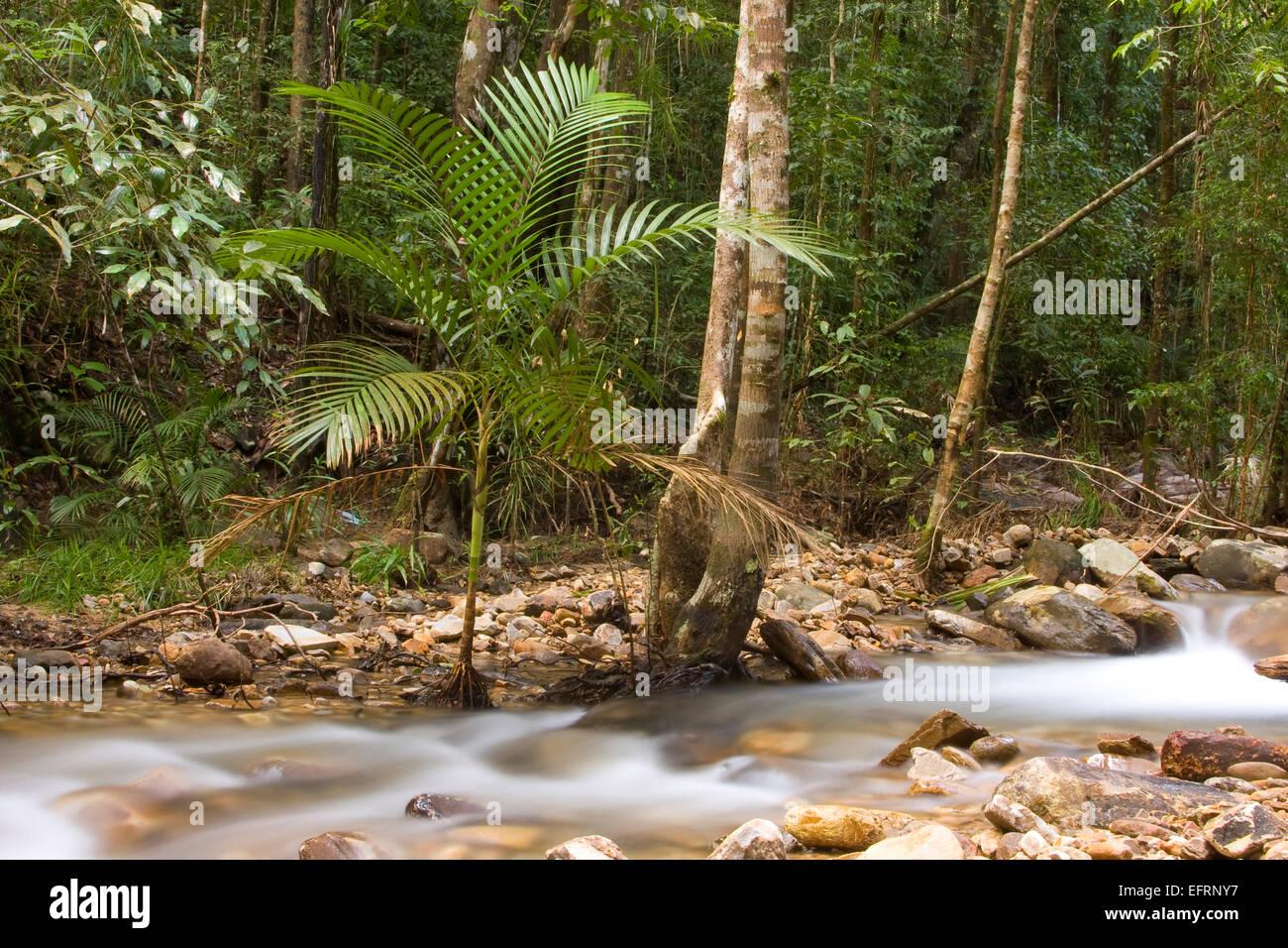 Primary rainforest Langkawi Malaysia,asia Stock Photo
