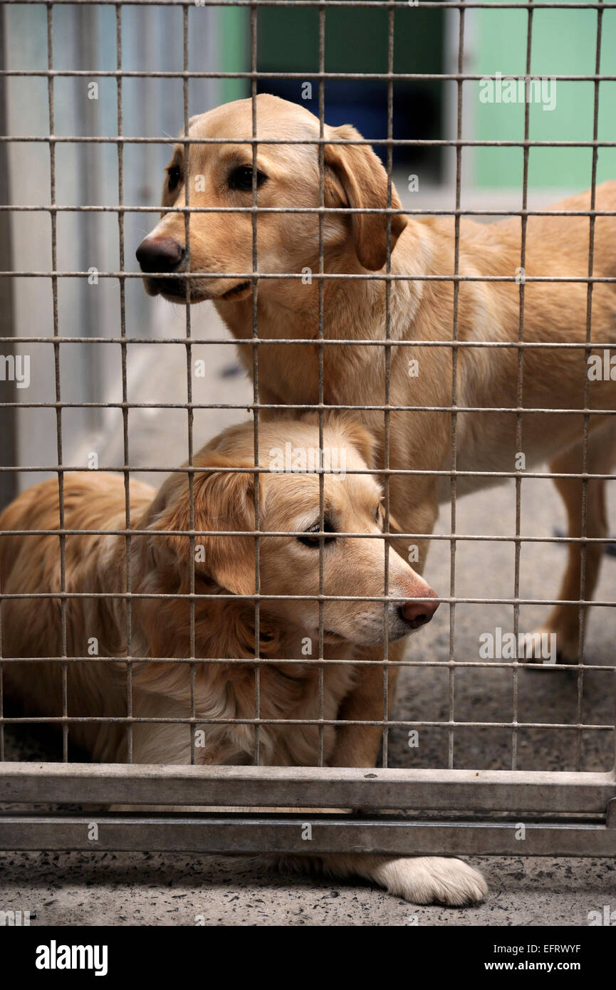 The Many Tears Animal Rescue centre near Llanelli, S. Wales UK - Stock Image