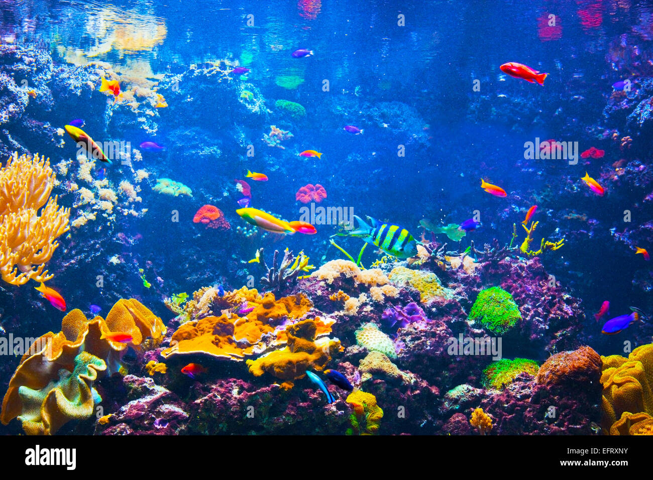 Underwater life. Coral reef, fish, colorful plants in ocean - Stock Image