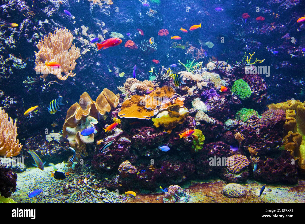 Underwater life Coral reef fish colorful plants in ocean Stock