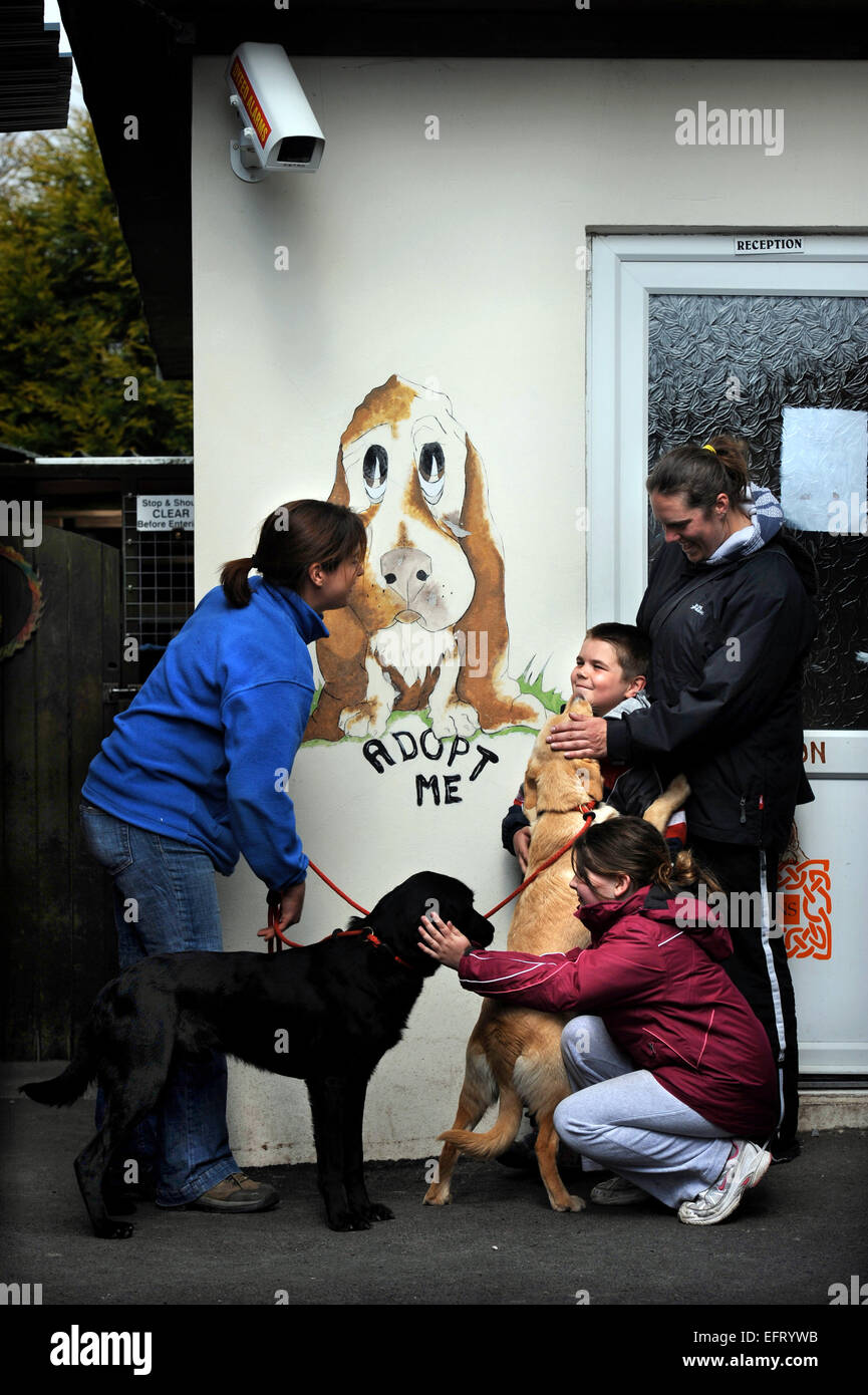 Children meet dogs for adoption at the Many Tears Animal Rescue centre near Llanelli, S. Wales UK - Stock Image