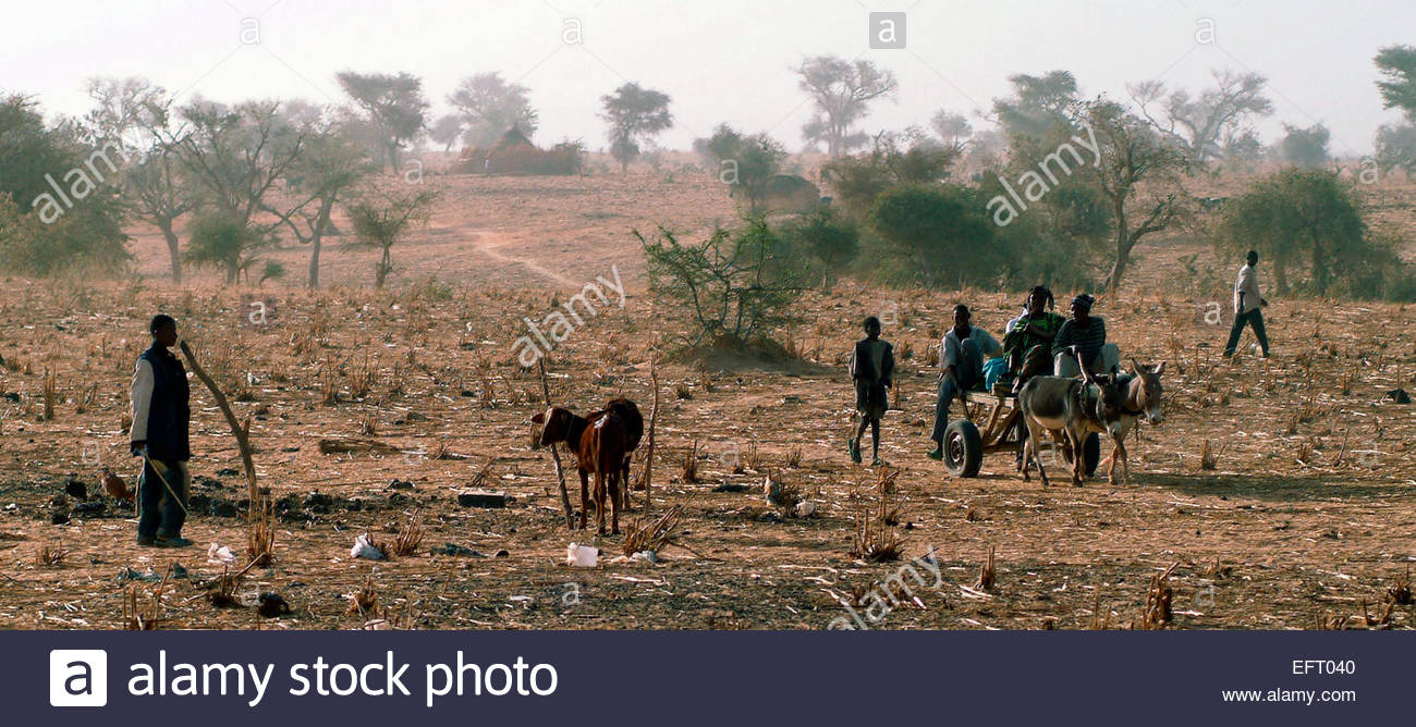 Republic Of Niger NER Western Africa Sahara Desert 2007 People Person Farming Agriculture - Stock Image