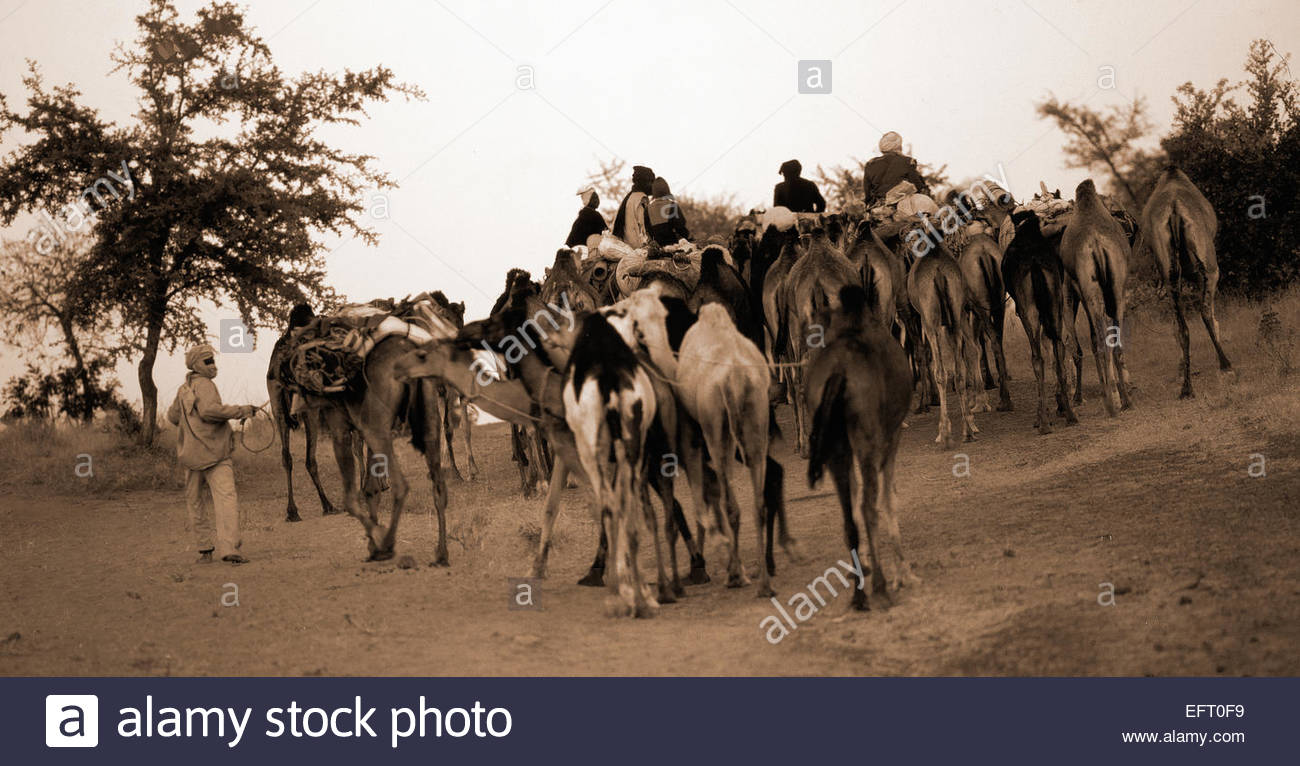 Republic Of Niger NER Western Africa Sahara Desert 2000 People Person Farming Agriculture Camel Camels - Stock Image