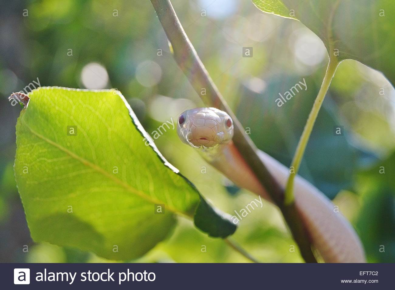 Close-up view of snake on branch Stock Photo