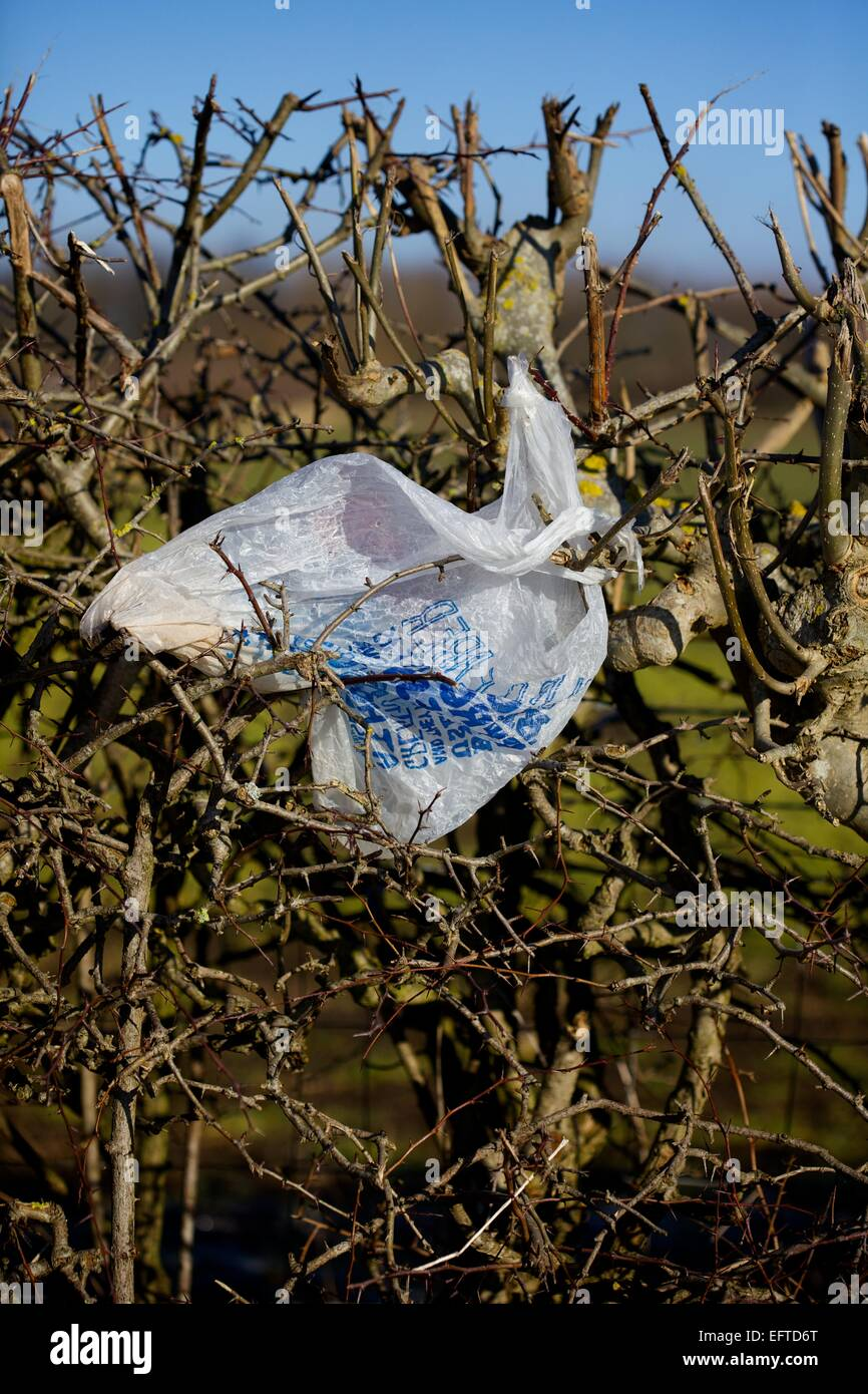 plastic bag left in hedgerow in countryside - Stock Image