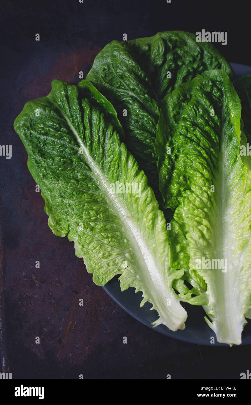 romaine lettuce leaves on a dark background - Stock Image
