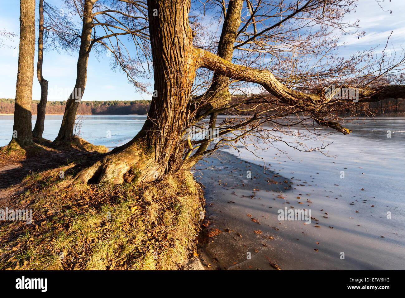 Freezing lake, winter landscape, Masuria, Poland - Stock Image