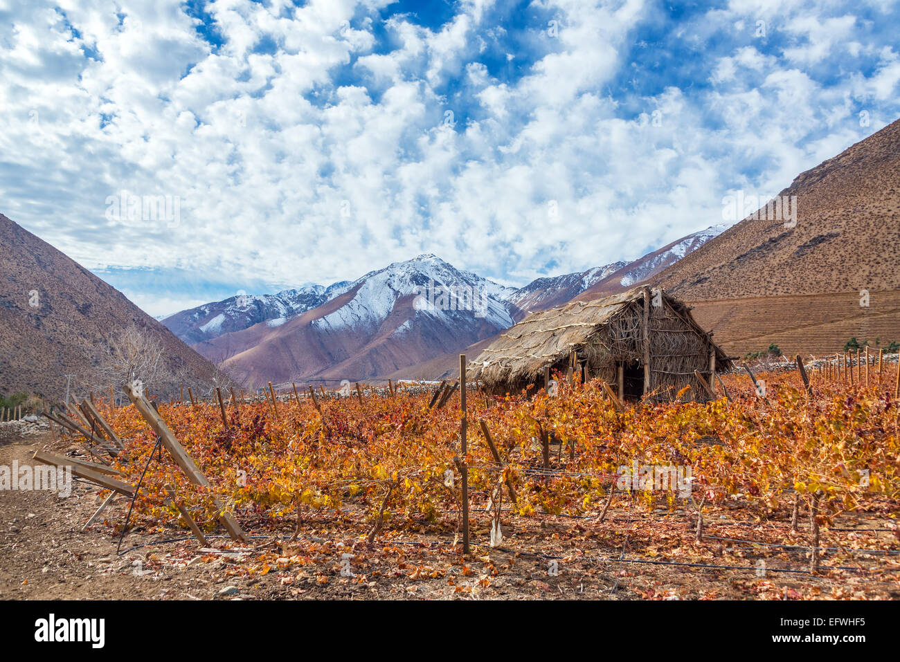 Vineyard in the Elqui Valley for pisco production with Andes mountains in the background in Chile - Stock Image