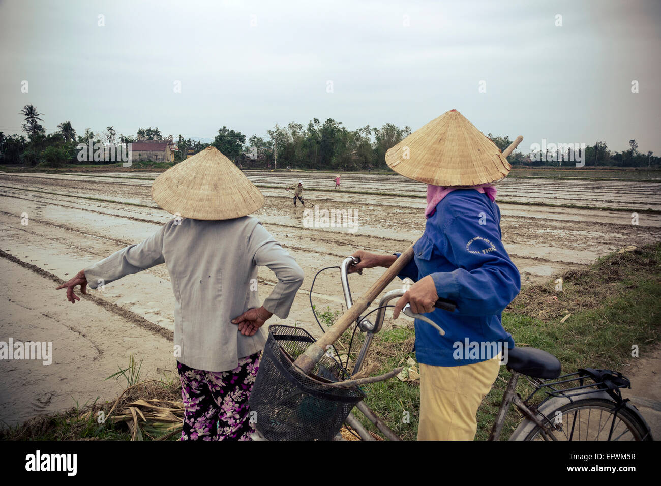 Workers by the paddy fields, Hoi An, Vietnam. - Stock Image