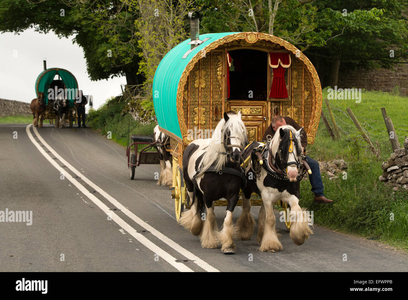 Traditional gypsy horse drawn caravan on road heading towards Appleby Horse Fair, Cumbria. - Stock Image
