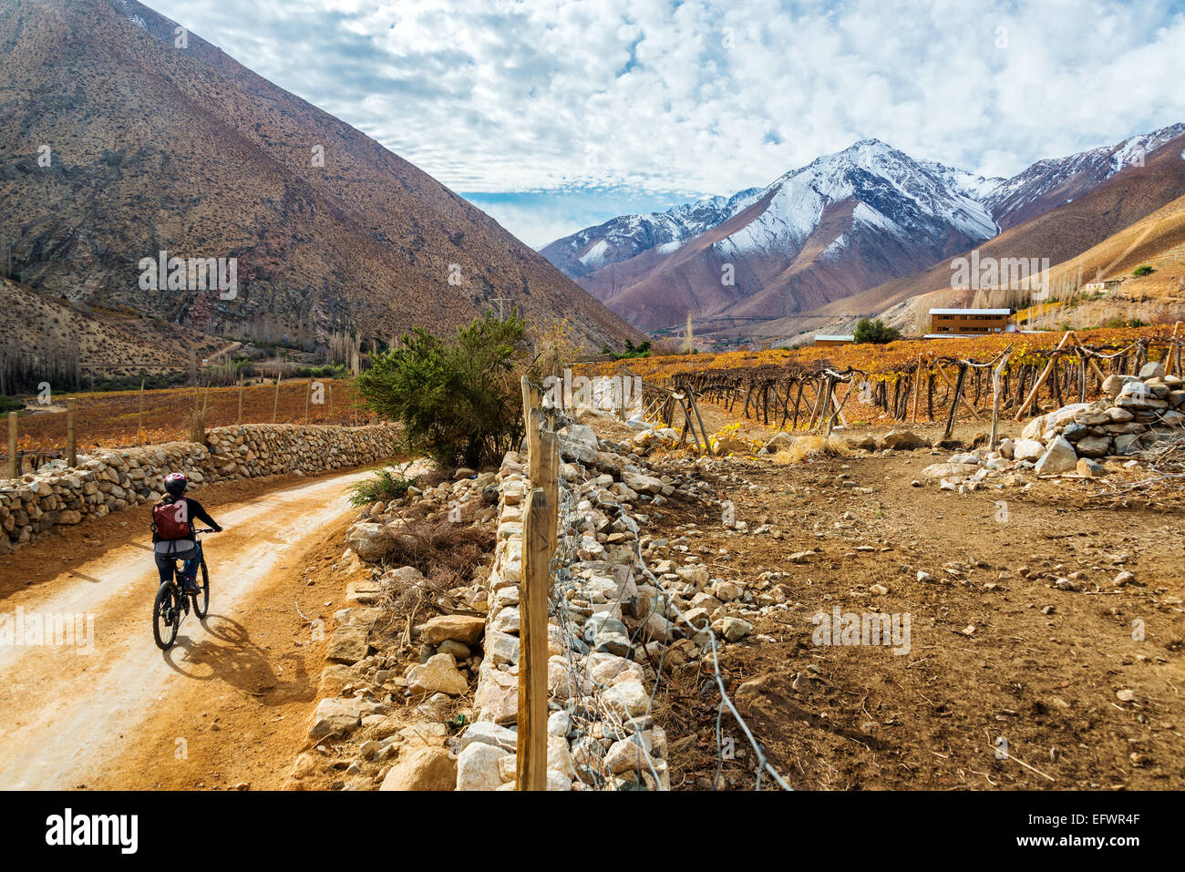 Young woman mountain biking in the Elqui Valley near Vicuna, Chile with the Andes mountains in the background - Stock Image