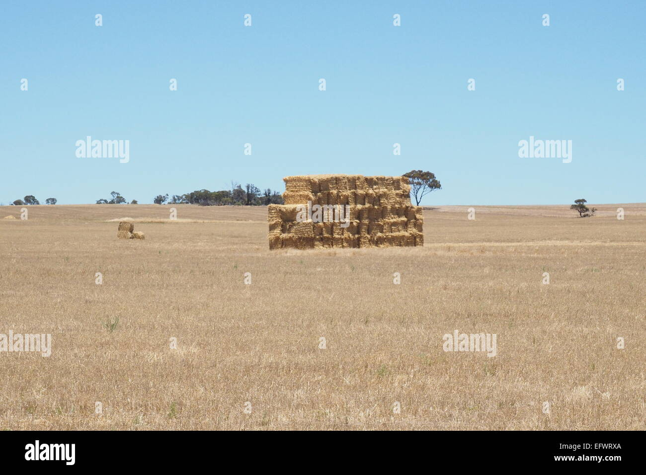 Haystack in the middle of a wheat field. - Stock Image