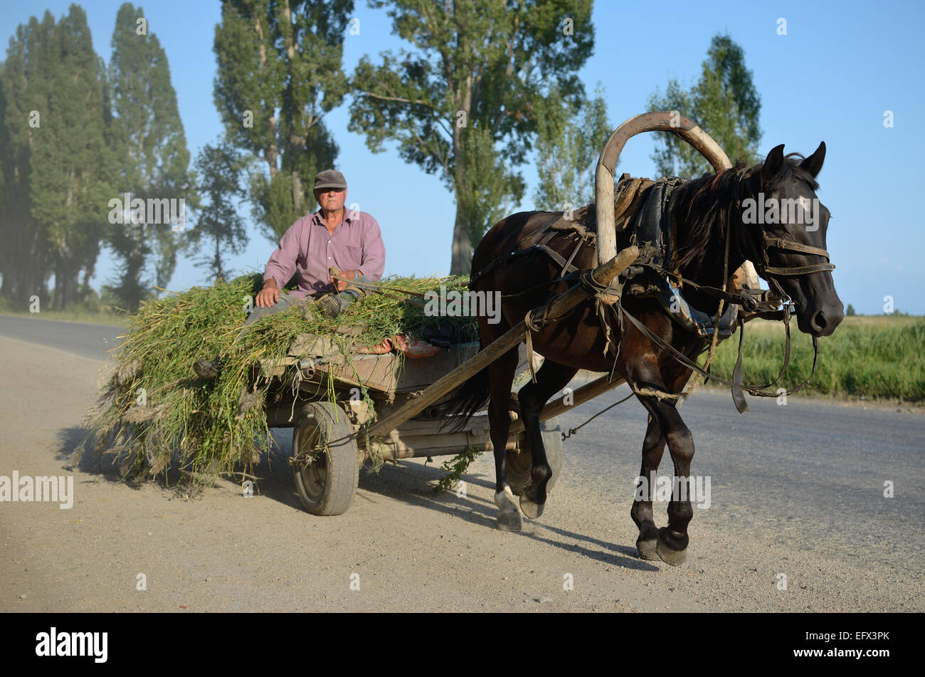 Kyrgyzstan farmer drive a horse cart with hay. - Stock Image