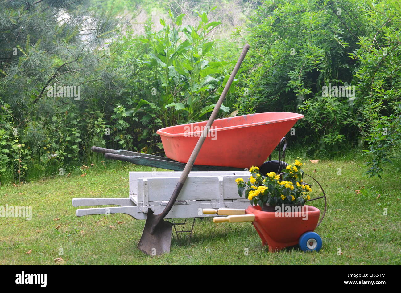 Three wheelbarrows - Stock Image