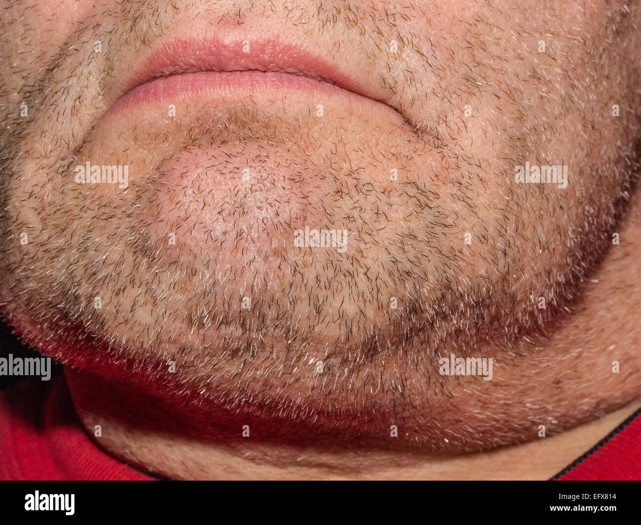 Macro close-up image of a heavily stubbled male chin showing beard growth. Model is unidentifiable. Only chin and - Stock Image