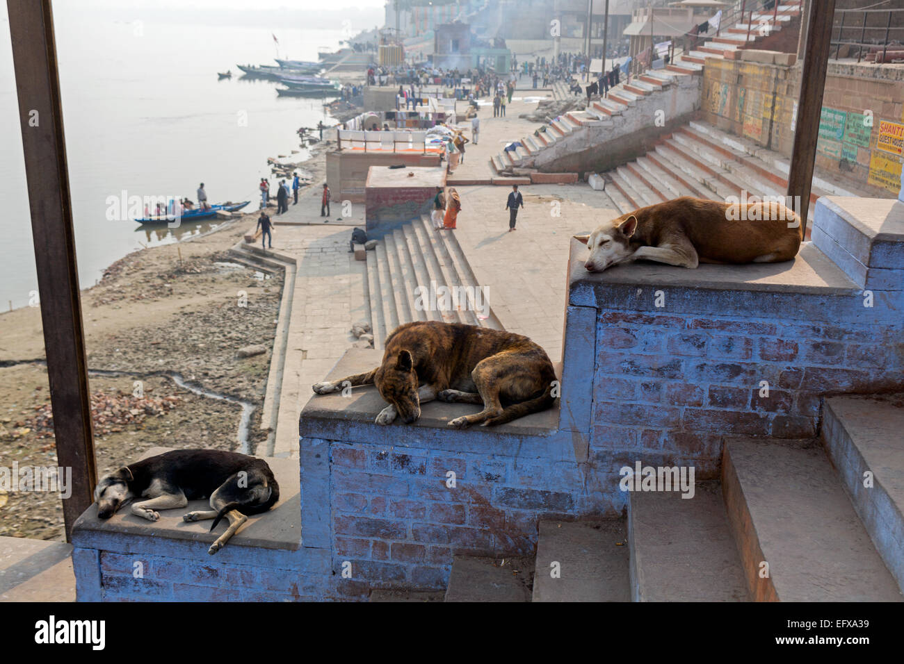 Three dogs resting in the midday heat on the stairs of a ghat at the riverbank of the Ganges - Stock Image