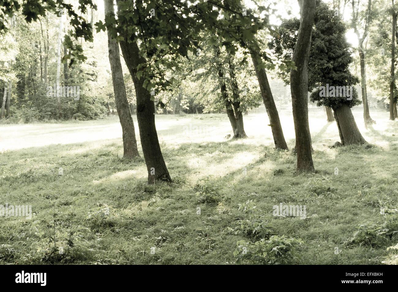 Harrachpark, Bruck an der Leitha, Austria, Lower Austria - Stock Image