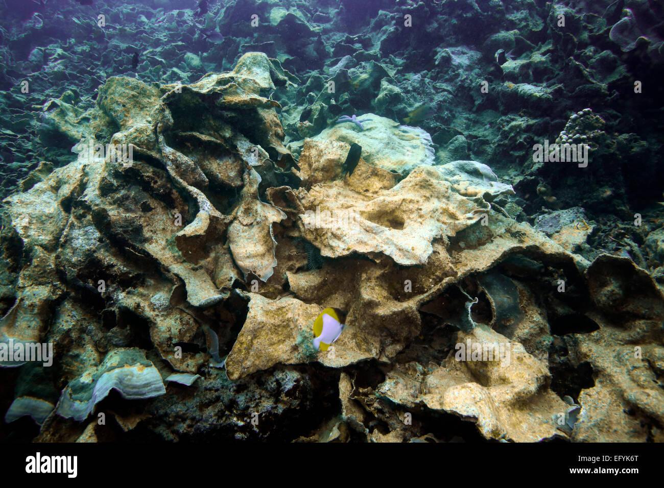 Dying coral reef at Bunaken Island, Sulawesi - Stock Image