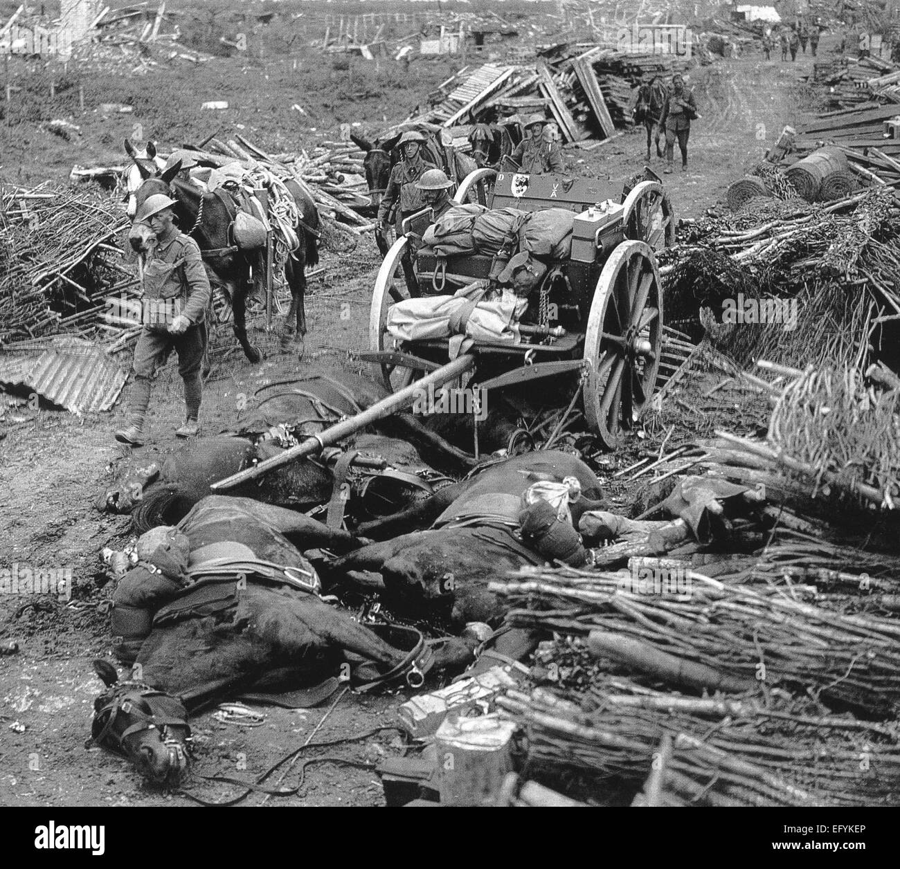 FIRST WORLD WAR Dead horses in unidentified location in France. - Stock Image