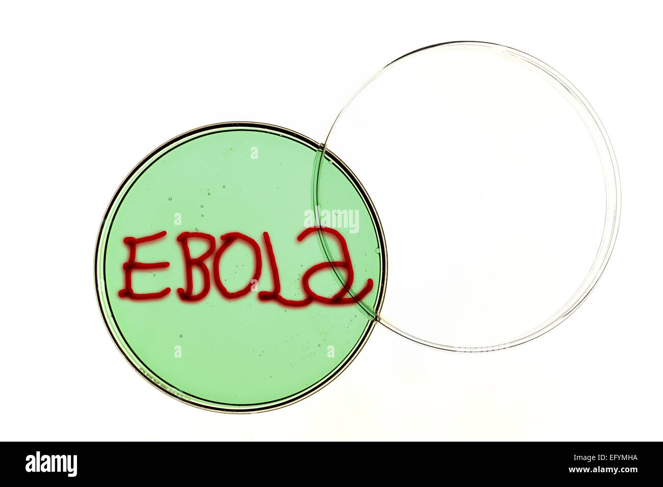 Ebola virus spelling out ebola in a petri dish. - Stock Image