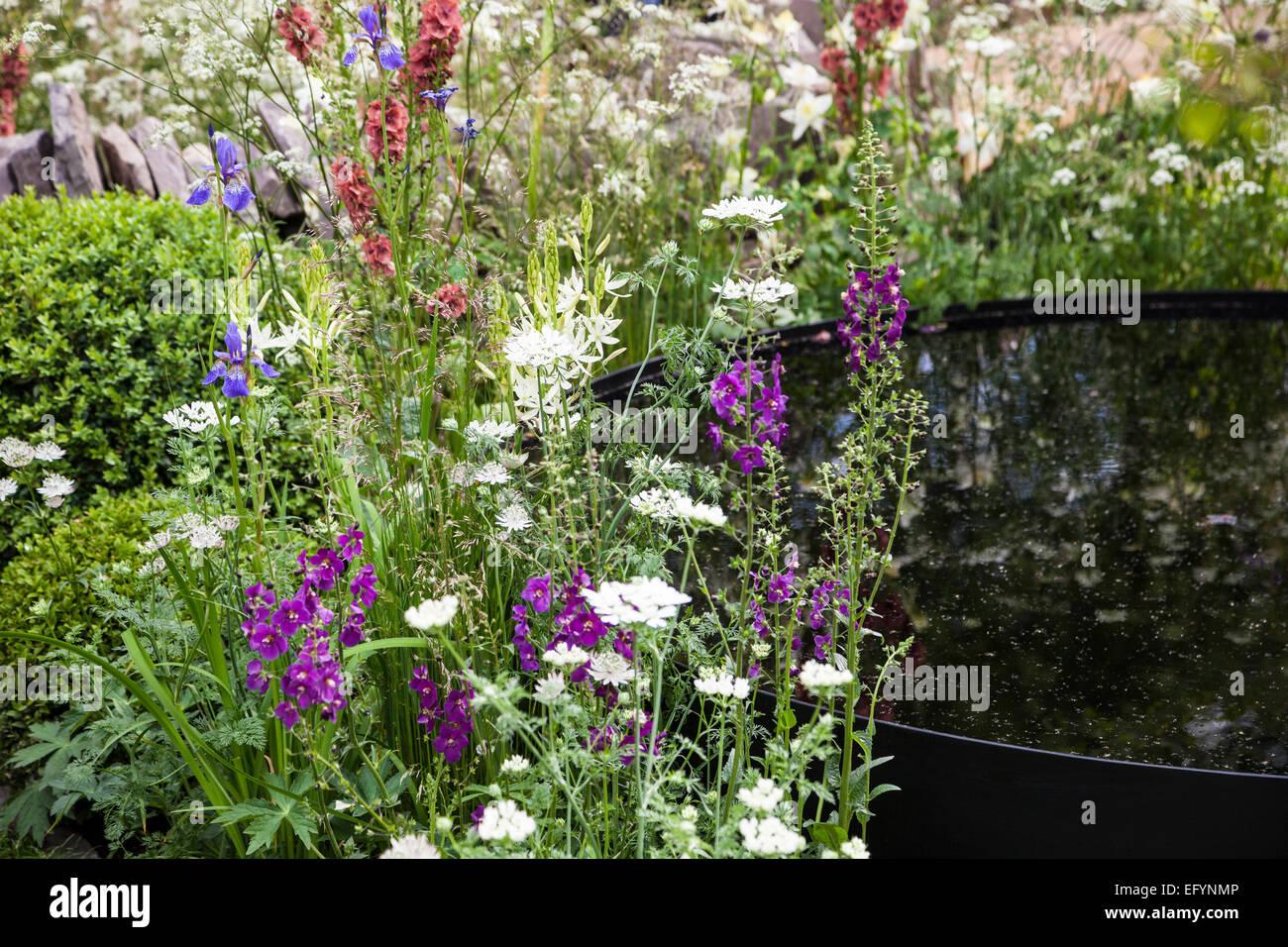 Black water bassin, box balls and naturalistic planting featuring verbascum and orlaya - Stock Image