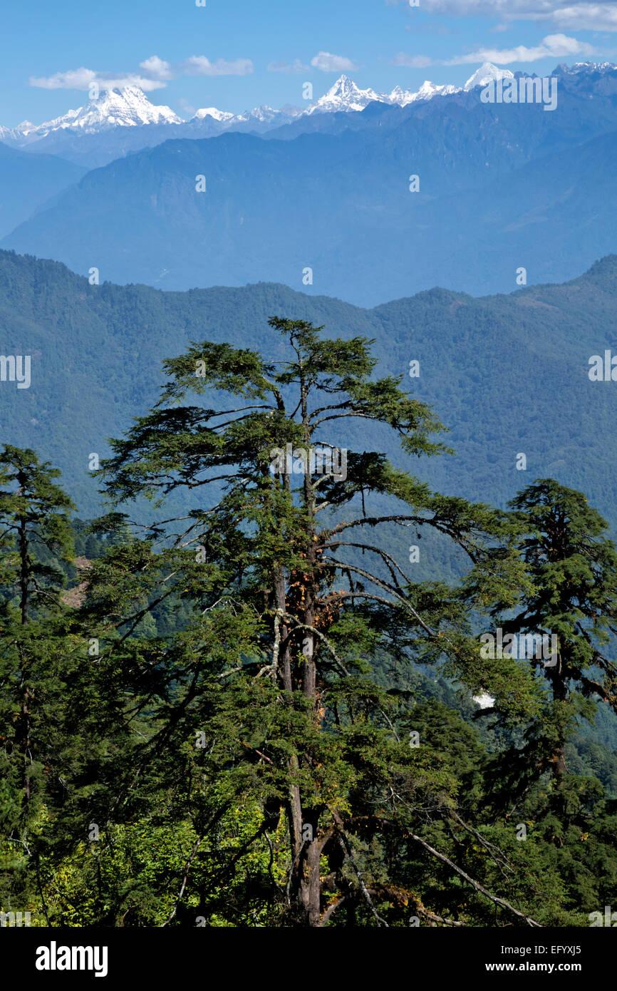 BU00104-00...BHUTAN - View of the Bhutanese Himalaya from Dochhu La (pass). - Stock Image