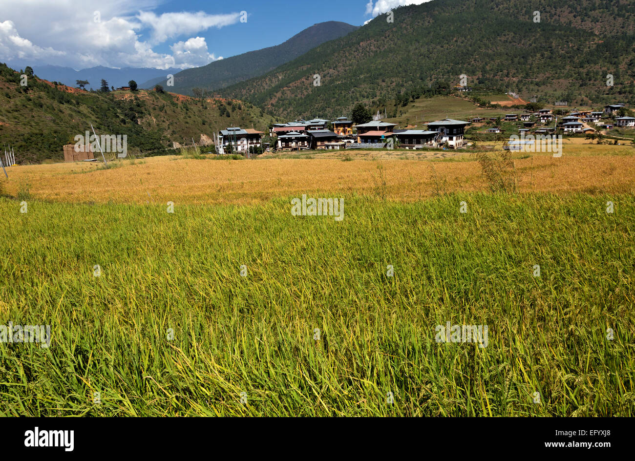 BHUTAN - Rice fields and town of Yoaka below the Chimi Lhakhang built to honor Lama Drukpa Kunley, known as the - Stock Image
