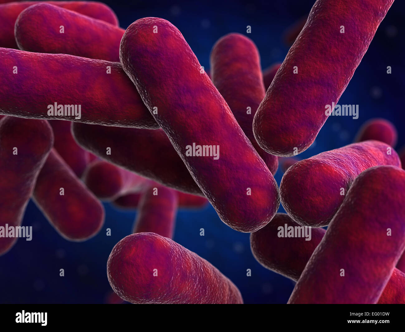3d render of bacteria cells - Stock Image