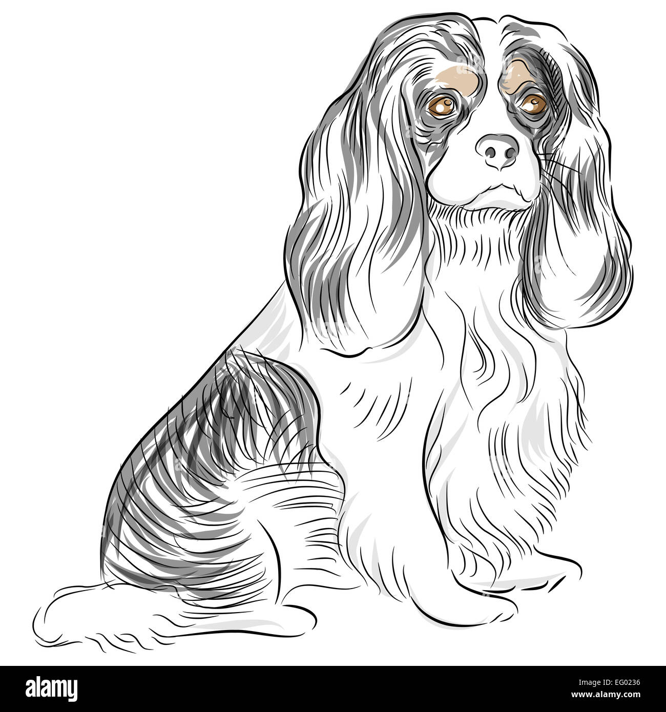 An image of a Cavalier King Charles Spaniel dog Drawing
