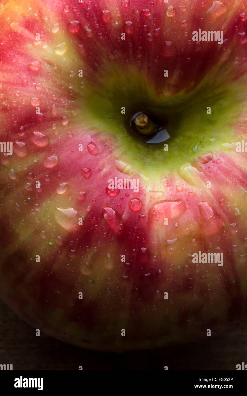 Detail, macro shot of a honeycrisp apple with water droplets. - Stock Image