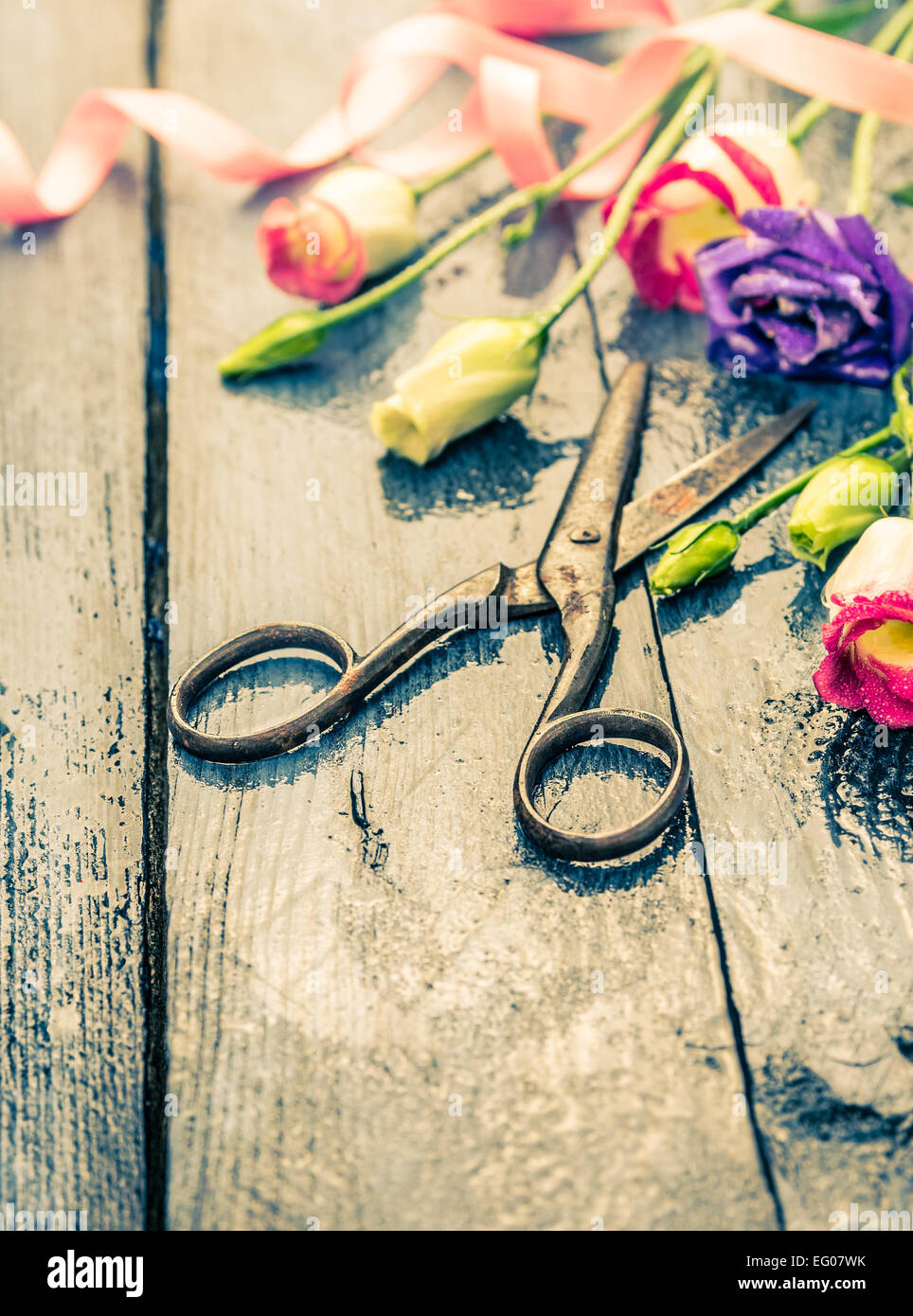 Old scissors with summer flowers on blue wooden table, toning - Stock Image