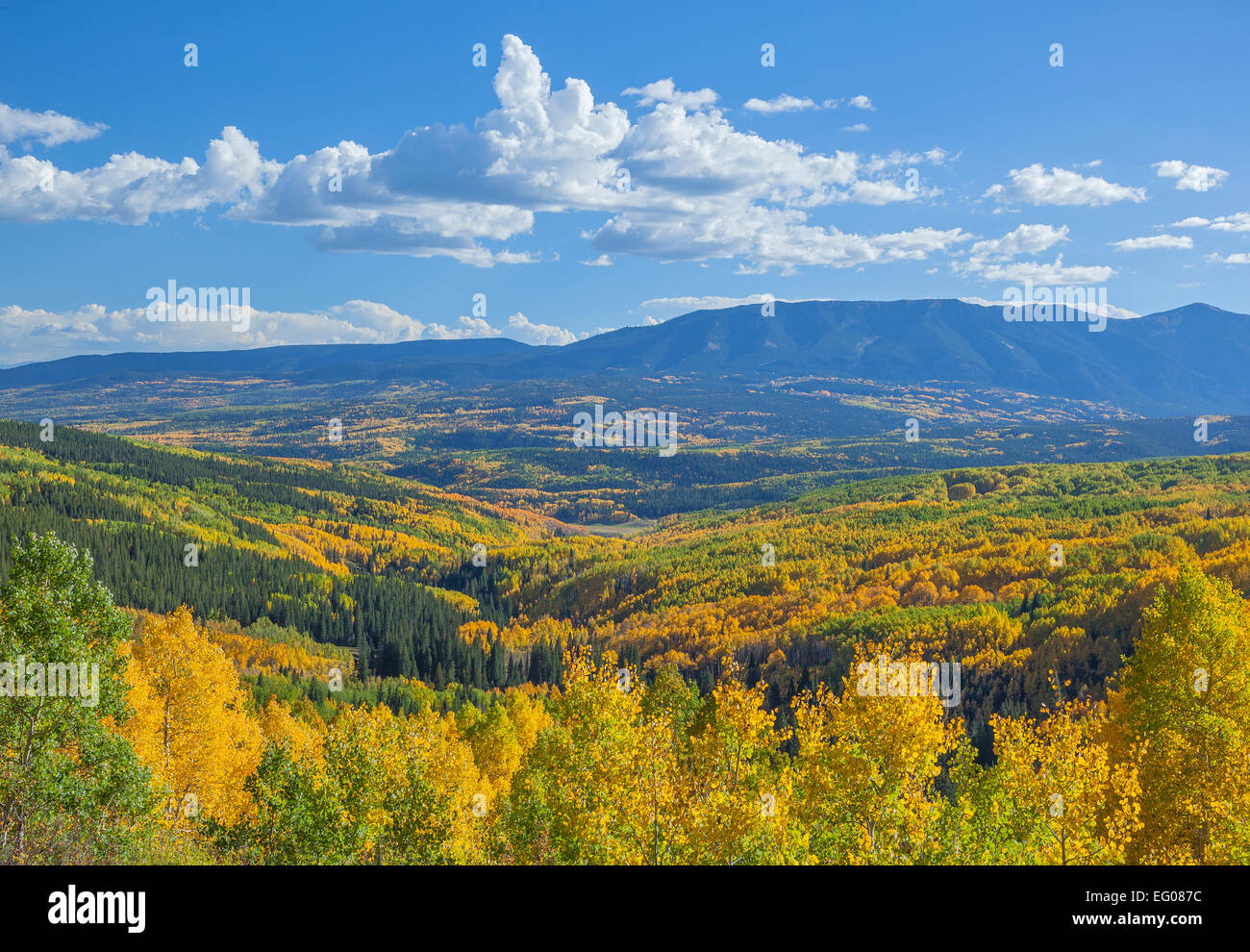 Gunnison National Forest, CO:  Fall color in Ohio Creek Valley and the West Elk Mountains in West Elk Wilderness - Stock Image
