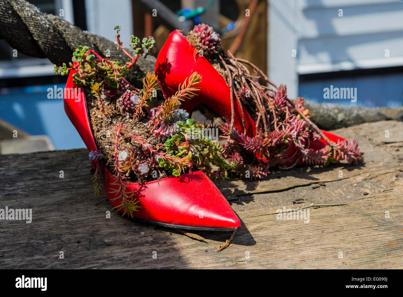 Succulent plants in red high heel shows, Cowichan Bay, British Columbia, Canada - Stock Image