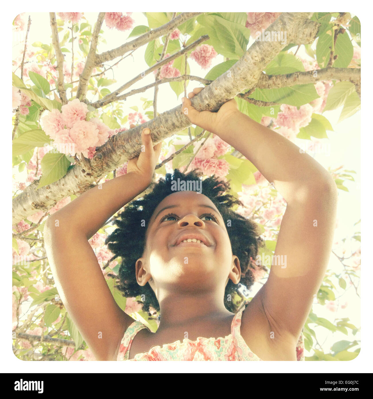 Girl holding branch of blossoming tree - Stock Image