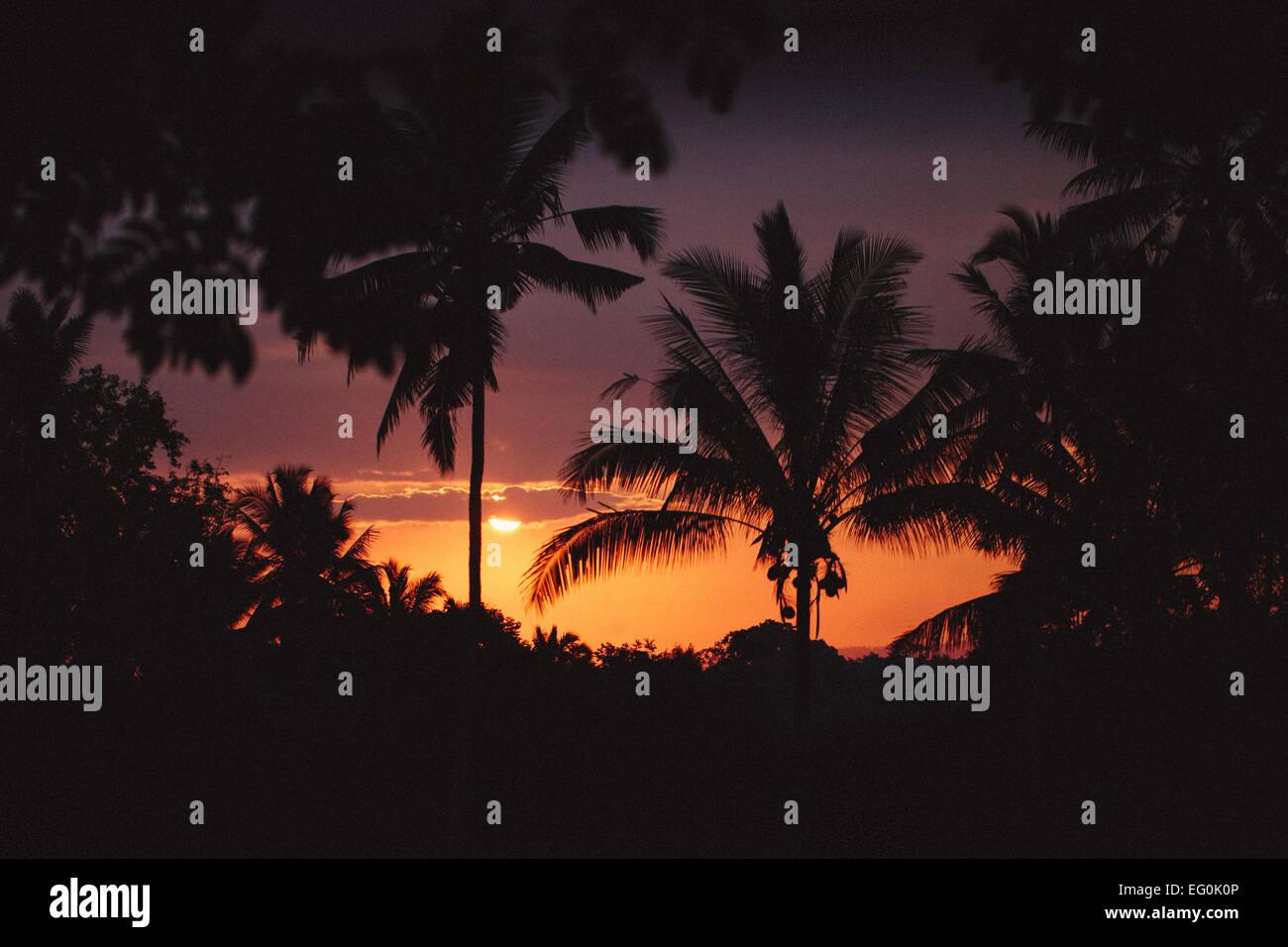 Indonesia, Bali, Ubud, Palm trees silhouetted against sunset Stock Photo