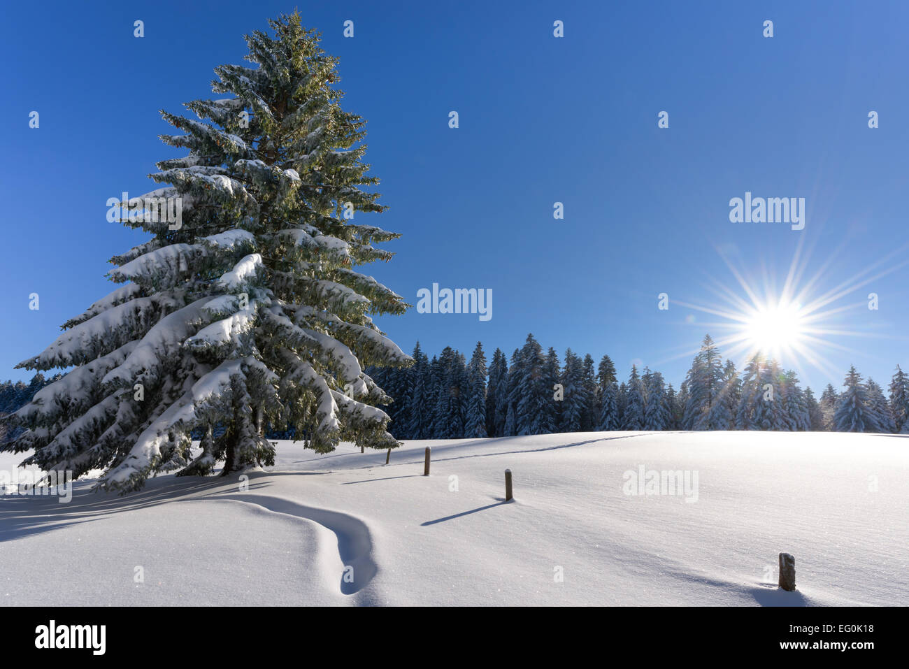Switzerland, St. Gallen, Sun shining in clear sky over fresh snow and spruce tree - Stock Image