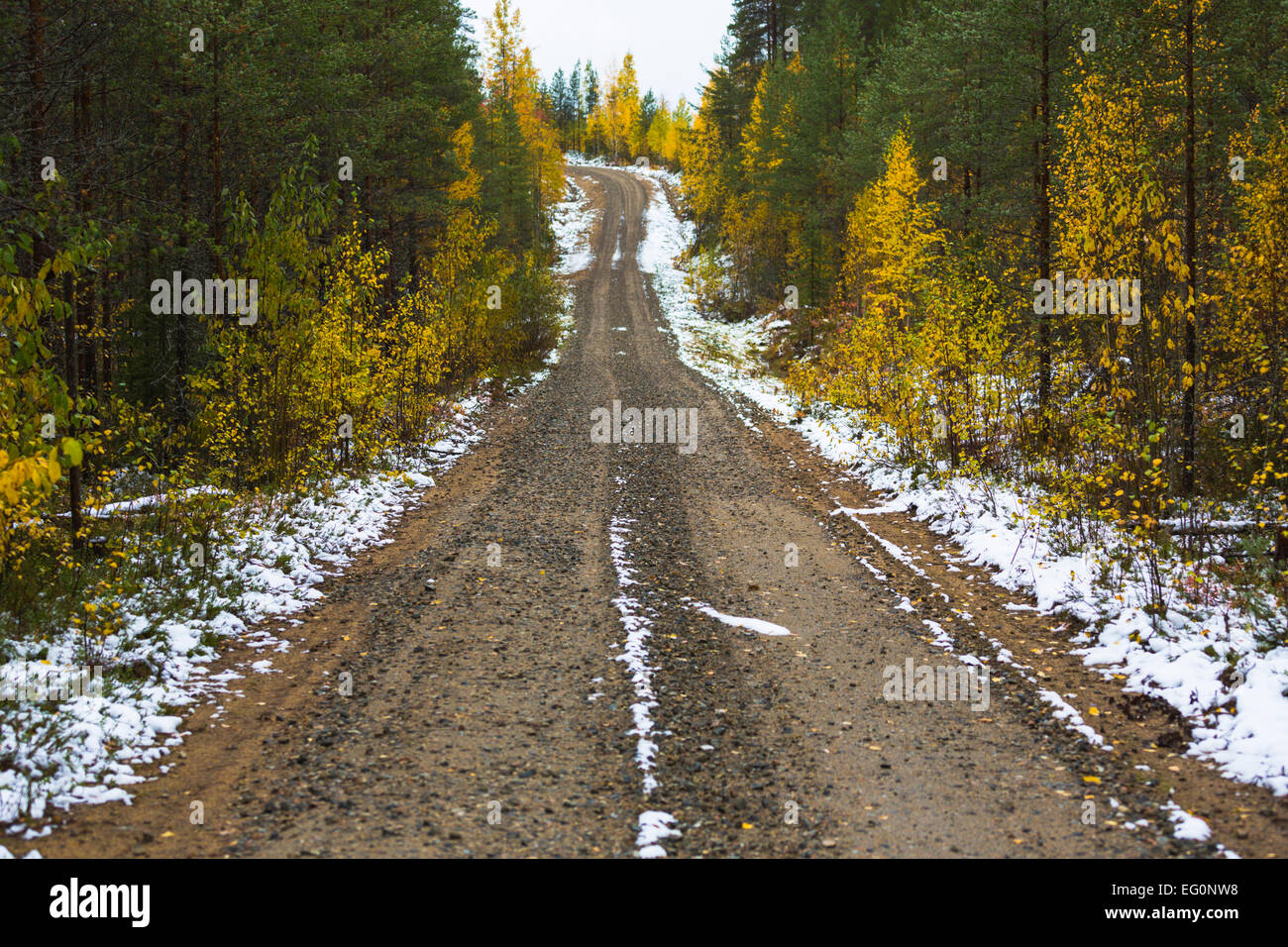 Road in forest with autumn yellow birches at the side and little snow has fallen, Kuhmo, Finland - Stock Image