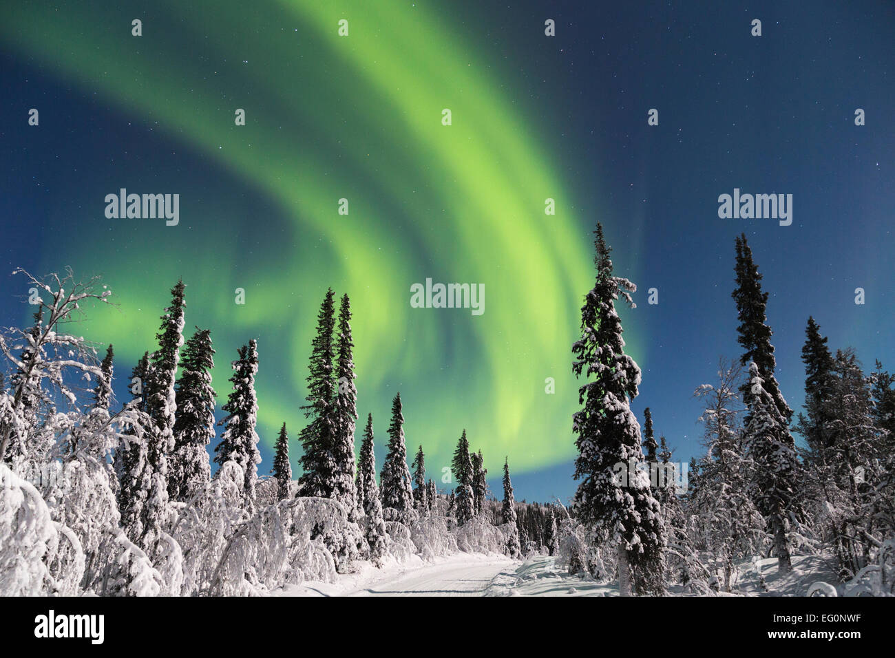 Northern light, Aurora borealis and moonlight  over winter forest and winter road, Gällivare, Sweden, Swedish - Stock Image