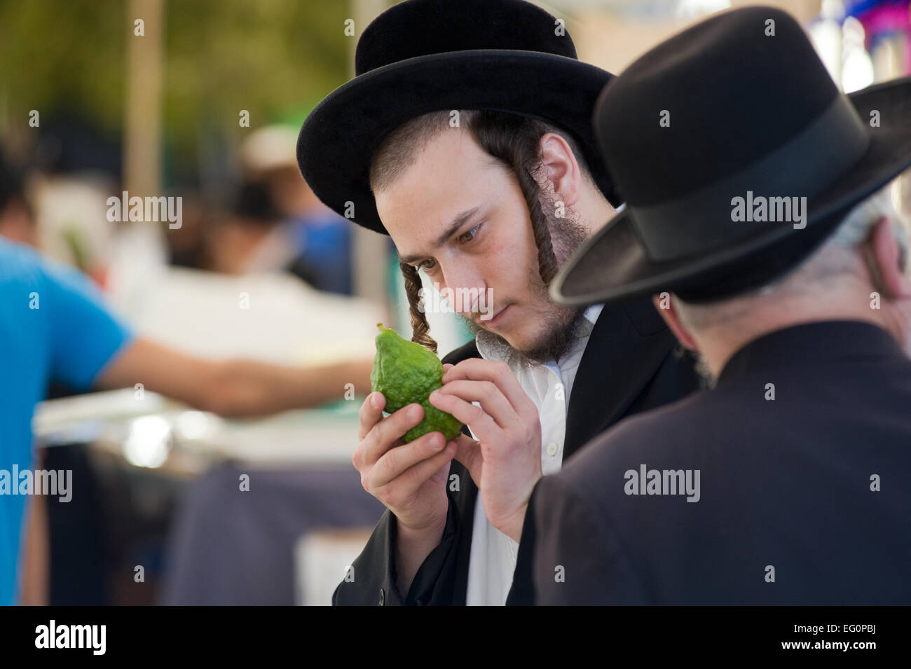 An orthodox jewish man is checking a citron on a market in Jerusalem just before the sukkot - Stock Image