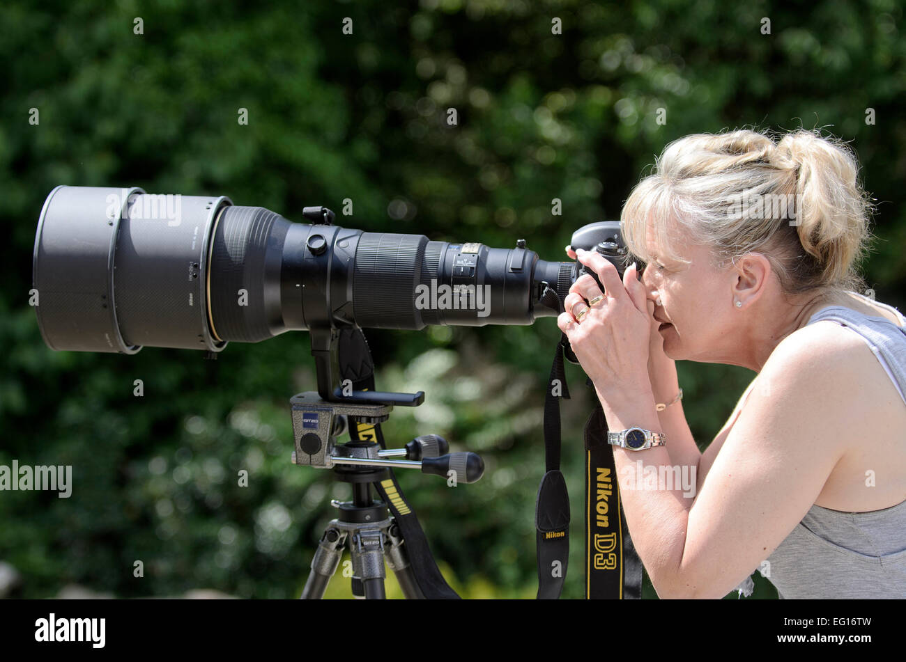 woman using a 600 mm telephoto lens on a Nikon D3 release available - Stock Image