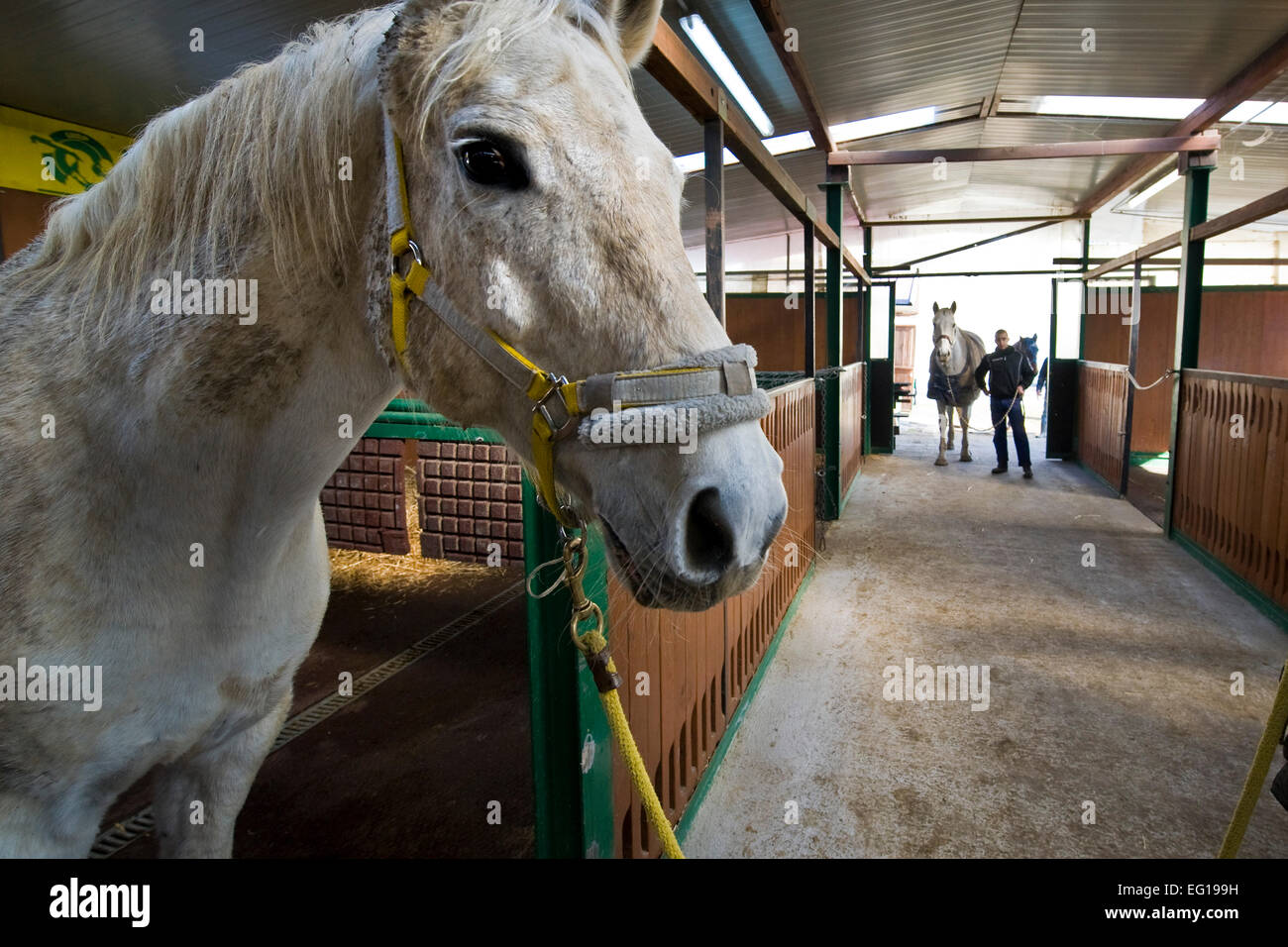 Italy, Bollate prison, riding horses - Stock Image