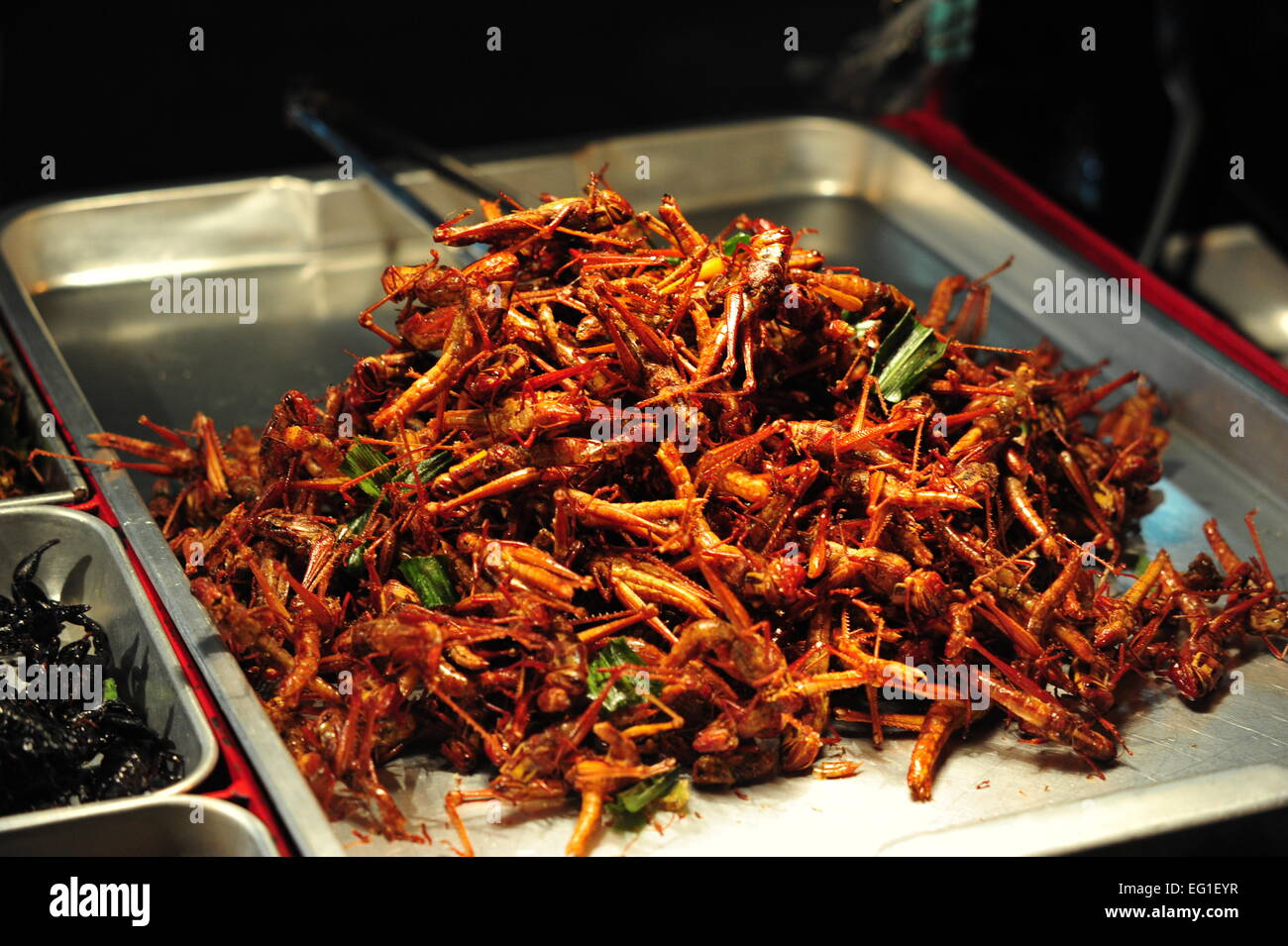 Fried Insects on a Nightmarket in Bangkok, Thailand. - Stock Image
