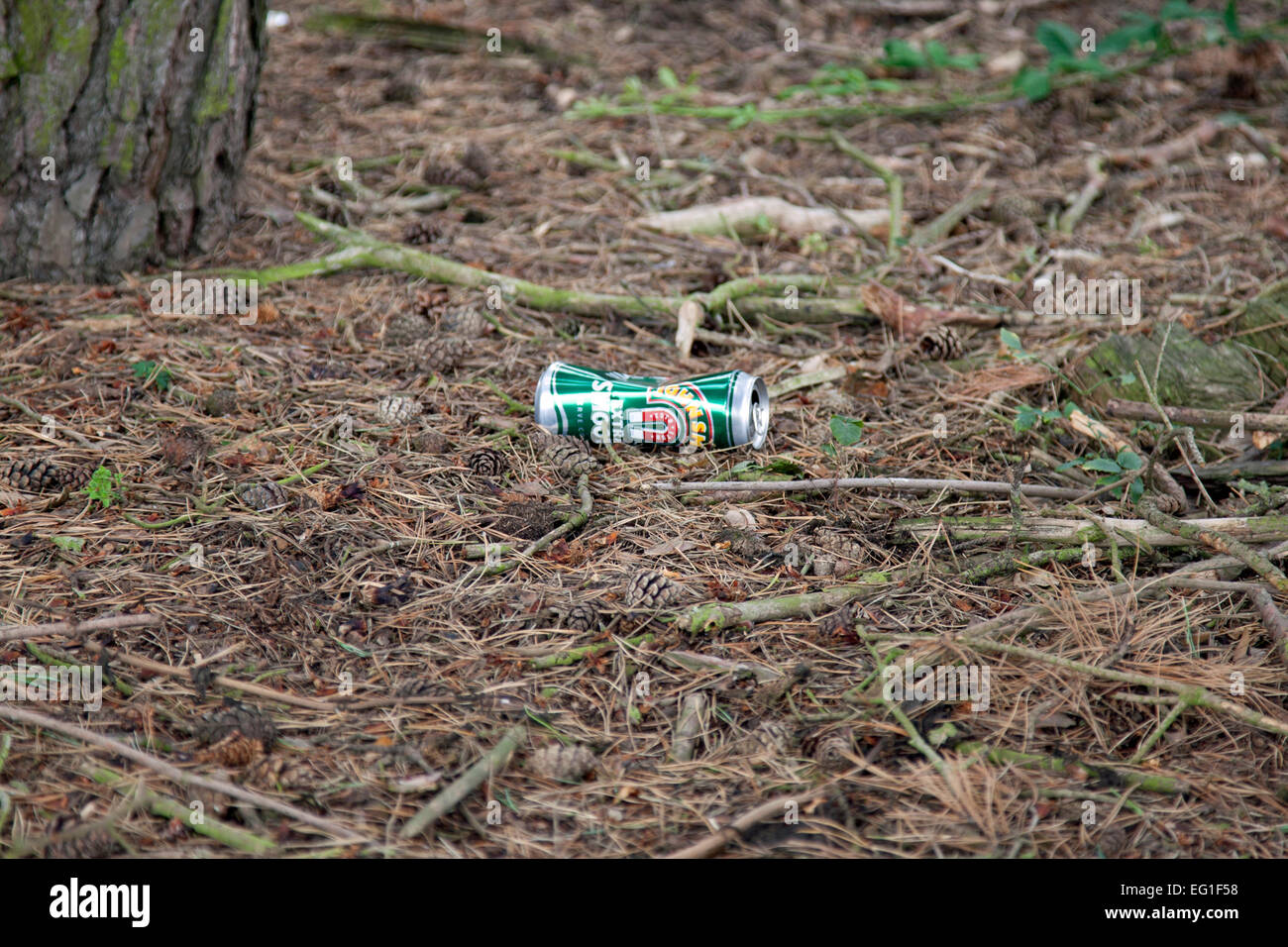Beer can thrown away in woodland - somebody else's problem - Stock Image