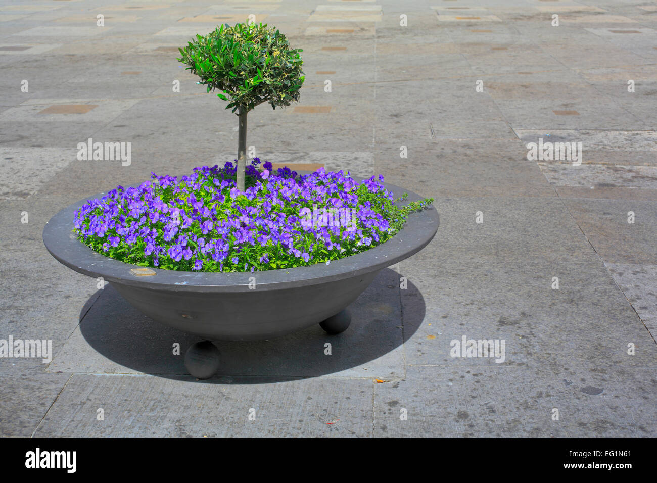 Flowerbed, Jaen, Andalusia, Spain Stock Photo