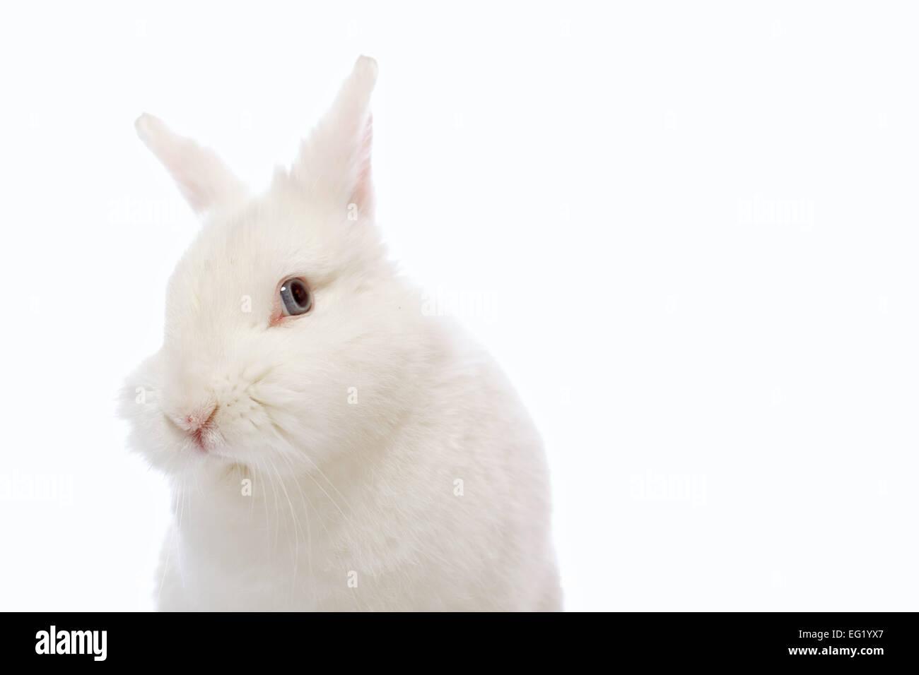 rabbit on white background - Stock Image